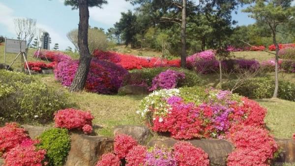 의성 호국동산 붉은 색의 향연 봄꽃 만발1.jpg