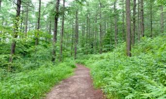 의성군, '맞춤형 숲가꾸기' 추진