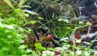 연에 실은 아름다운 토속관상어 축제의 물결