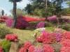 붉은 색의 향연 봄꽃 만발한 의성 호국동산