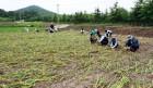 이상저온으로 인한 농작물 피해조사 및 신속 대응 추진