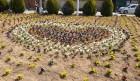 금성면새마을부녀회, 화단 꽃묘 식재... 면민들에게 꽃향기를!